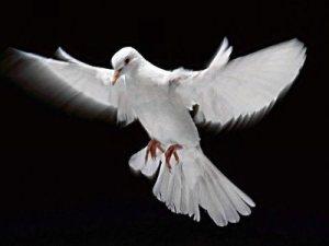 Espirito Santo uma pomba?